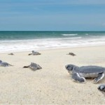 Turtle-Sanctuary-Visit-Baby-Turtle-Release